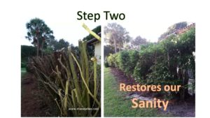 step-2-trees
